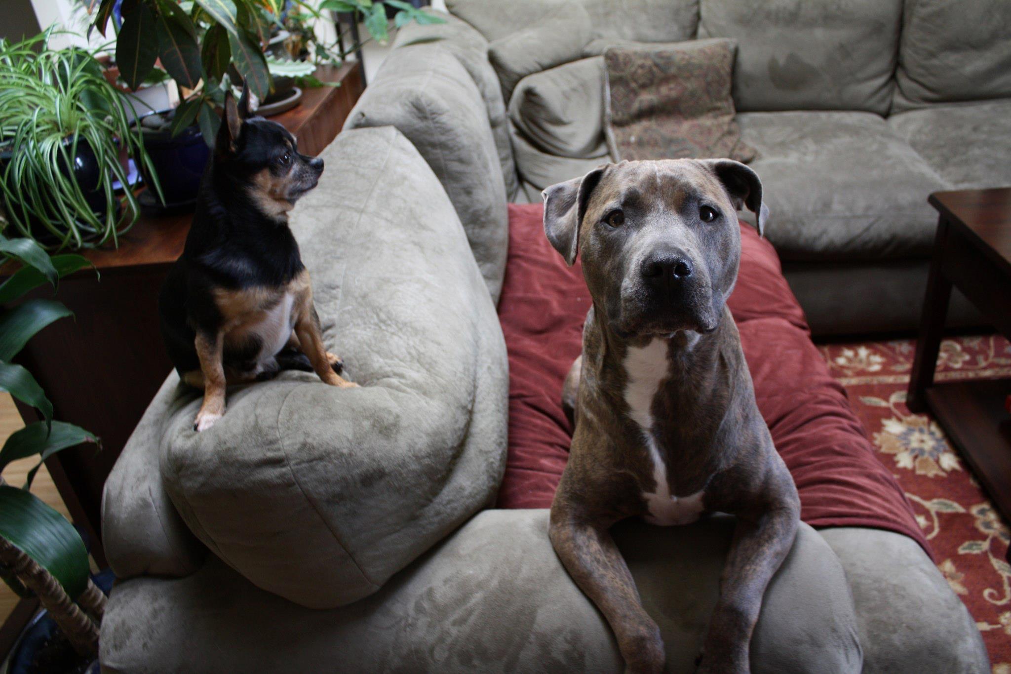 Kumu and Moke