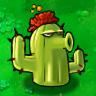 Cactus Plant Guide