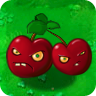 Cherry Bomb Plant Guide