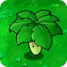 Umbrella Leaf Plant Guide